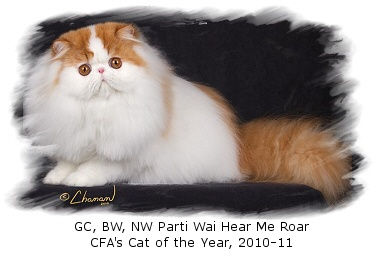 Inthewind Cattery - Persians and Himalayans
